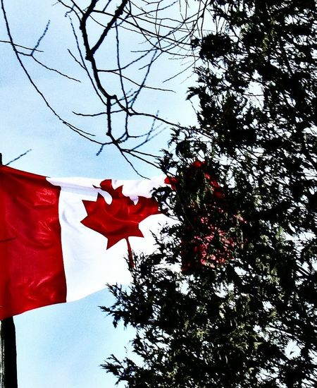 Ontario Canadian Iamcanadian Canada Canada, Eh? Canadian Flag Outdoors Nature Country Living Countrylife Water Beach Canadiannature Showcase July
