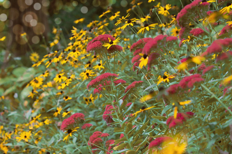 Close-up of yellow flowering plants during autumn