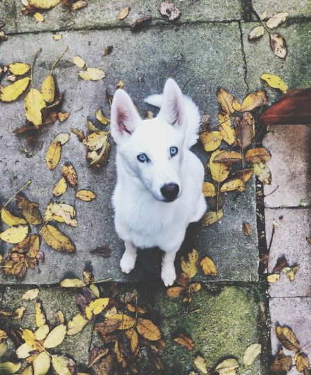 Winter lover Looking At Camera Portrait Domestic Animals Mammal Pets Animal Themes Leaf Outdoors One Animal Dog High Angle View Day No People Nature Pomeranian