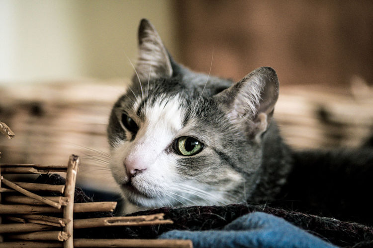 Animal Themes At Home Close-up Companion Day Domestic Animals Domestic Cat Feline Focus On Foreground Indoors  Leave Me Alone Mammal No People One Animal Pet Photography  Pets Relaxing Resting Whisker