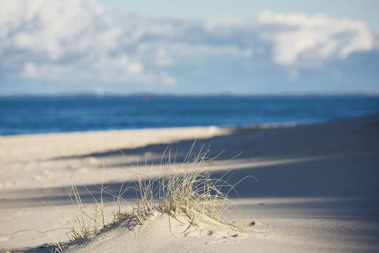 Beach Sea Land Sand Water Sky Nature Tranquility Horizon Over Water Tranquil Scene Beauty In Nature Scenics - Nature Horizon No People Day Focus On Foreground Plant Sunlight Cloud - Sky Marram Grass Sylt Sylt, Germany Sylt_collection