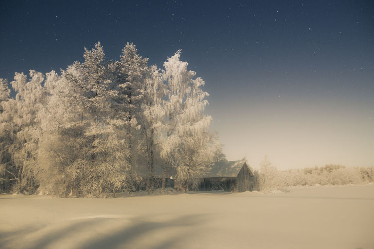 Countryside in moonlight Tree Sky Cold Temperature Snow Winter Beauty In Nature Tranquil Scene Land Tranquility Field No People Nature Landscape Night Environment Clear Sky Outdoors Moonlight Nature_collection Scenics Barn Building Freshness Beauty In Nature Beautiful