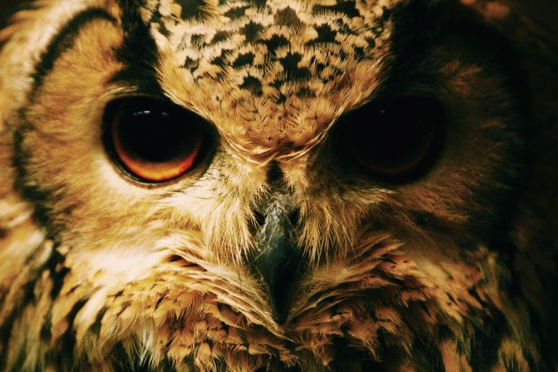 Owl I Love Owls  Face The EyeEm Facebook Cover Challenge