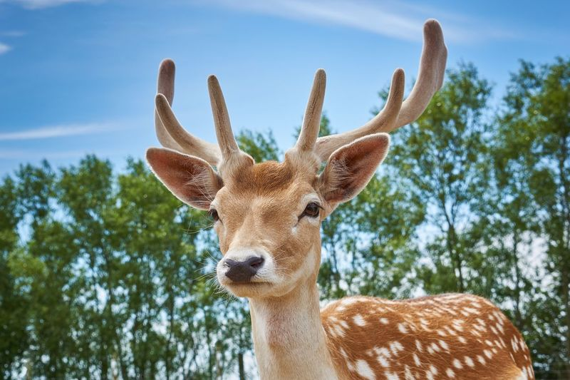 Portrait Of Deer Against Sky