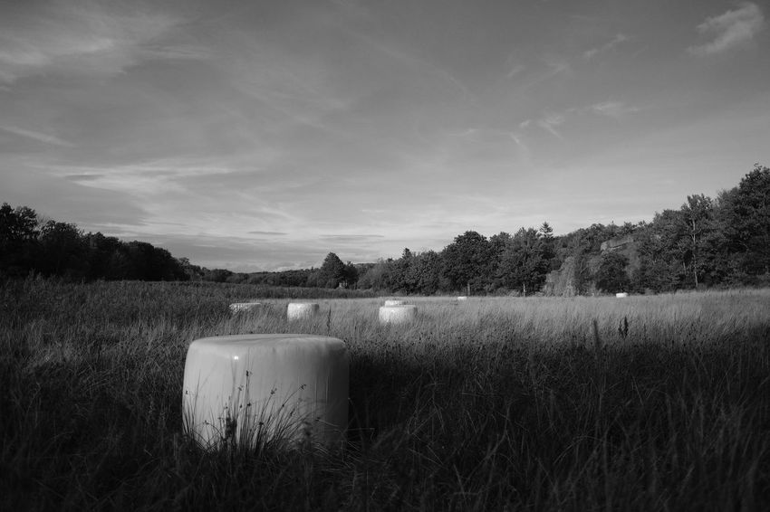 Cow eggs Aker Beauty In Nature Bnw Cloud - Sky Cow Eggs Ensilage Eyeem Black And White Eyeem Monochrome Eyeem Sweden Farming Life Field FUJIFILM X-T2 Fujinon Grass Grassy Koägg Monochrome Nature No People Outdoors Silage Bales Sky Svartvitt XF16mmF1.4 Xshooter