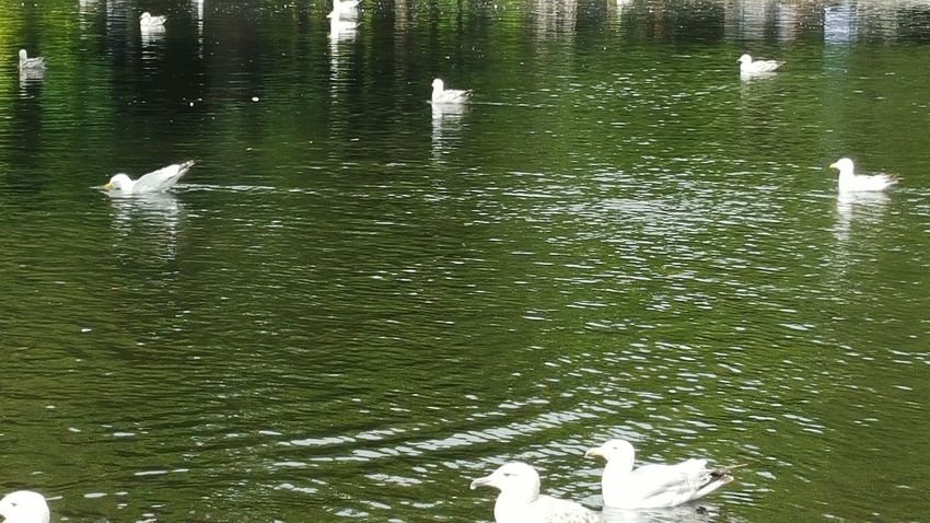 Nature On Your Doorstep Dublin St. Stephens Green Pond No Filter