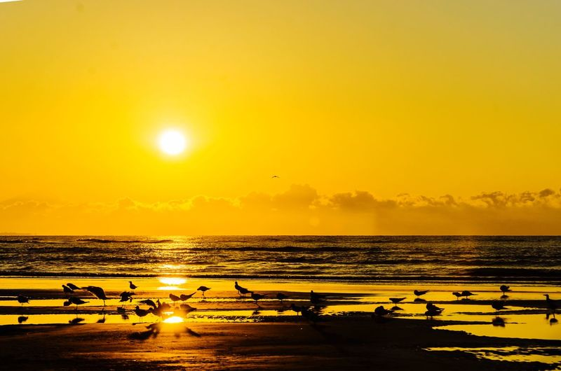 Creative Light And Shadow Nature Oystercatchers Birds Sunrise Beachphotography Beach Southcarolina Walking The Beach Golden Hour Paint The Town Yellow