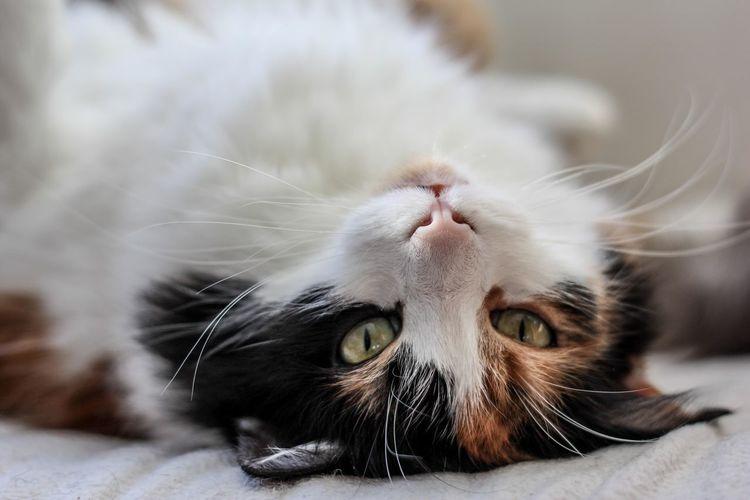 Animals Cat Close-up Colors Eyes Indoors  Light Look Pet Potrait