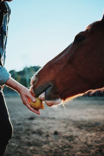 Close-up of hand feeding horse