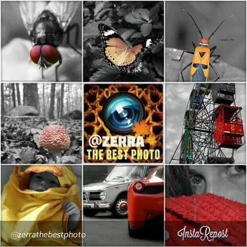 So many thanks to @zerrathebestphoto for selected my photo to your amazing gallery, keep tagging Thebestphoto_collection Zerrathebestphoto Zerrathebestphoto_hdr for your chance to be featured !!