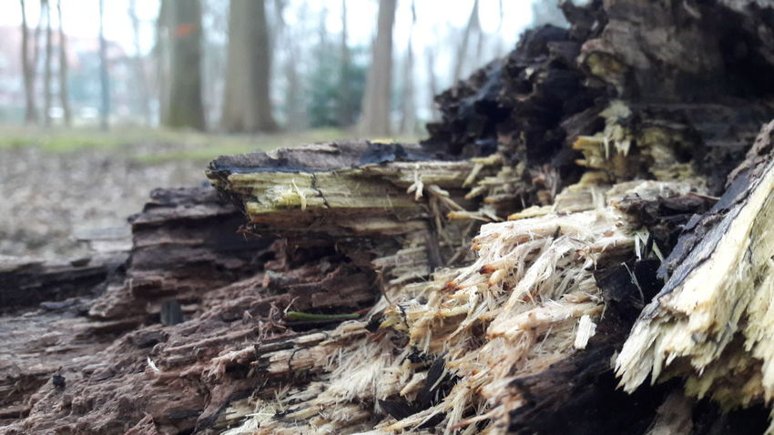 Forest Tree Tree Trunk Nature Deforestation Log WoodLand Wood - Material Lumber Industry Day Timber No People Tranquility Close-up Walking Around No Filter Enjoying Life Not Perfect Focus On Foreground Getting Out And Living Nature Tree Outdoors Tree Stump Beauty In Nature