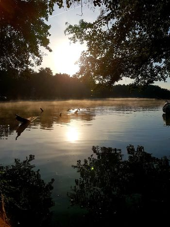 Beauty In Nature Nature Nature Photography Nature_collection Morning Light Morning Morgenstimmung See Seelandschaft Seascape Sealife Sea Naturephotography Tree Water Sunset Lake Silhouette Reflection Sky Reflection Lake Standing Water