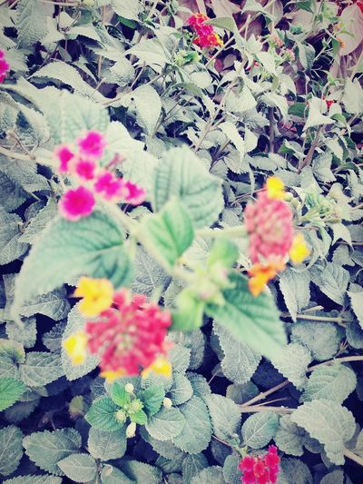 Close & Chaos -> Flowers ♡ EyeEmNewHere Flower Beauty In Nature Beautiful Chaos Not Clear Too Close Too Deep Meaningful  Flower Plant Blooming Leaves Spring Relaxing Moments Beautiful Petal Attractive Flora Blossoming  Flower Head Colored Daytime