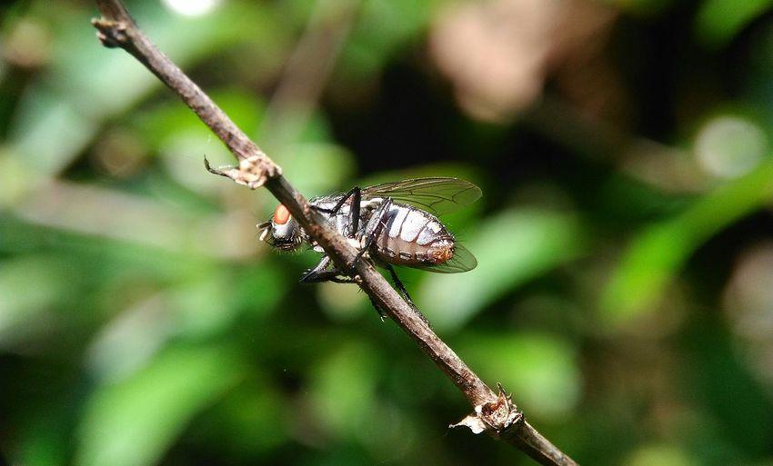 fly Macro Macro