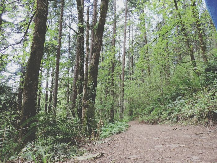 Trees Hiking Trail Eyem Nature Nature Photography Nature_collection