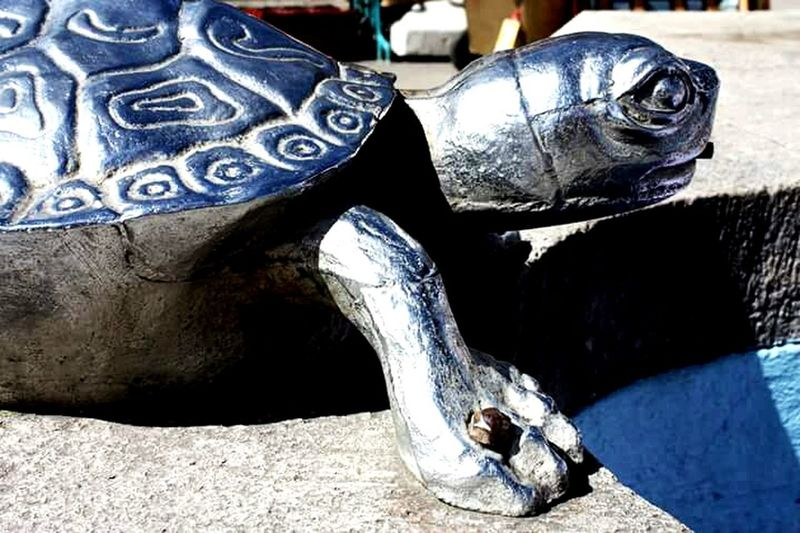 Animal Themes Day Close-up Outdoors No People Tourtle Silver  Silver Tourtle Silver Material Pachuca De Soto Mexico