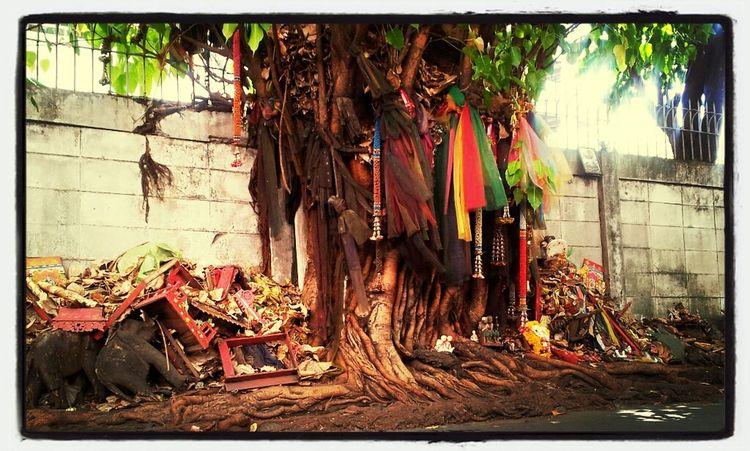 sacred tree. Streetphotography