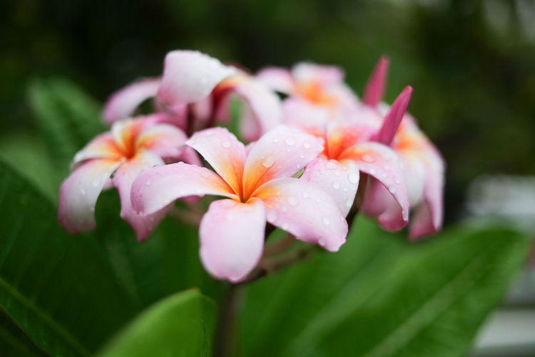 Plant Petal