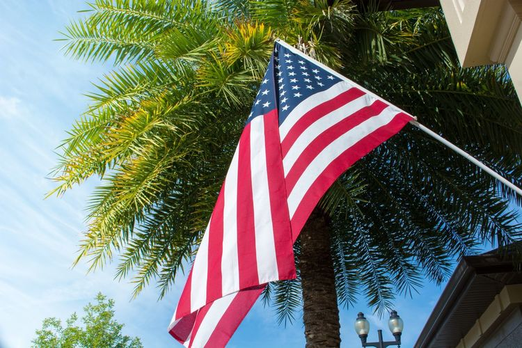 Low angle view of flag against tree