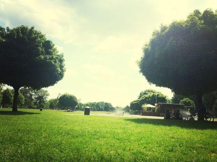 Park Sunny Day Daylight