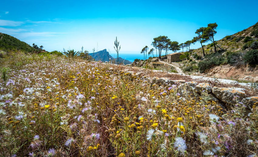 Beauty In Nature Day Flower Freshness Growth Mallorca Meadow Mountain Nature No People Outdoors Plant Scenics Sky Sunset Tranquil Scene Tranquility Tree Water