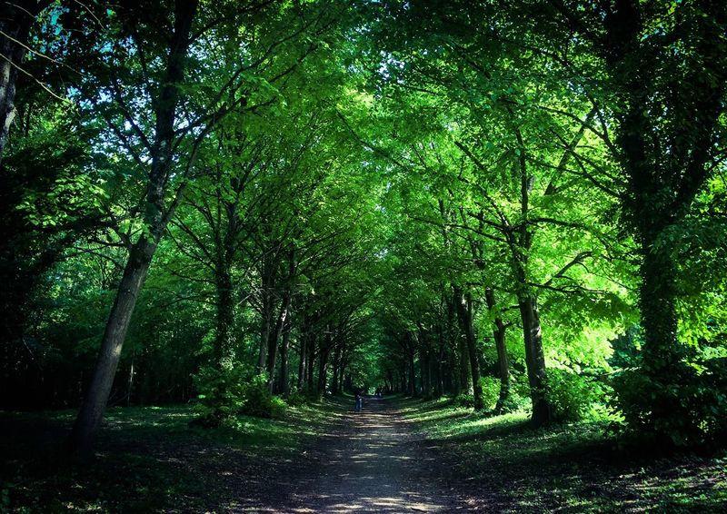 Landscape AMPt_community Walking Around Forest