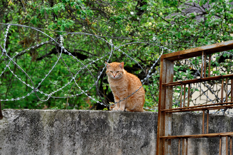 Portrait of a cat sitting on a fence