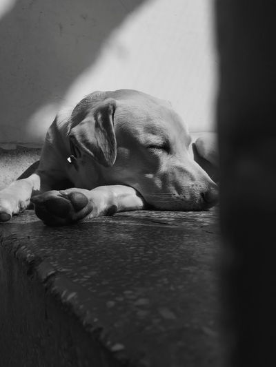 Close-up of dog sleeping on floor at home
