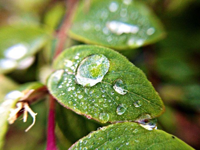 Macro_collection Nature IPhoneography Rain Lemon Lime By Motorola Macro Beauty Nature's Diversities Maximum Closeness