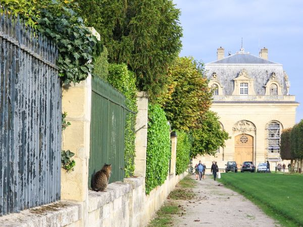 Cats Stray Cat Domestic Cat Front Or Back Yard One Animal Sitting Castle at Chantilly in Paris, France