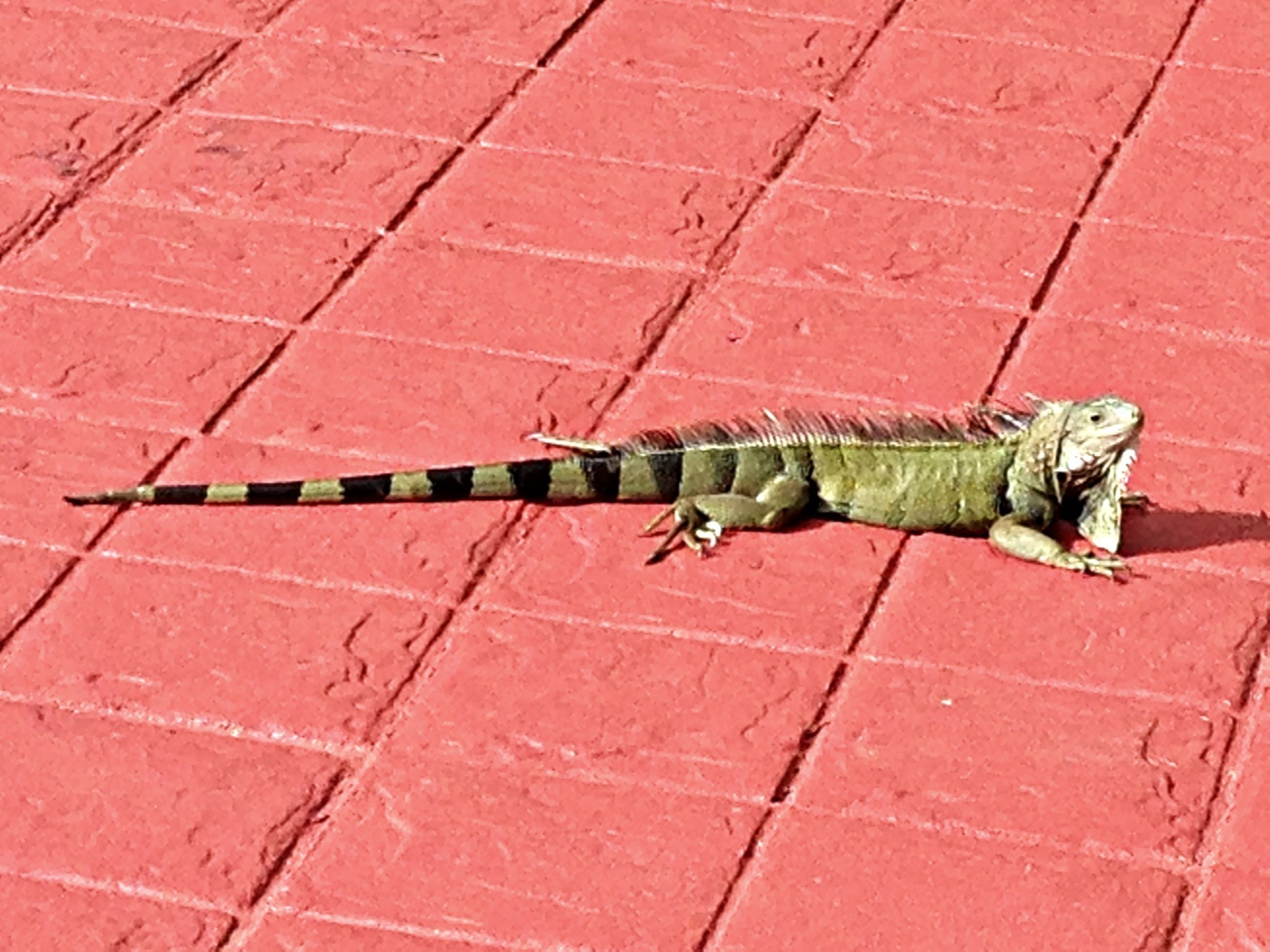 animal themes, one animal, high angle view, wall - building feature, outdoors, built structure, tiled floor, street, day, wildlife, building exterior, no people, animals in the wild, full length, architecture, insect, sidewalk, cobblestone, domestic animals, transportation