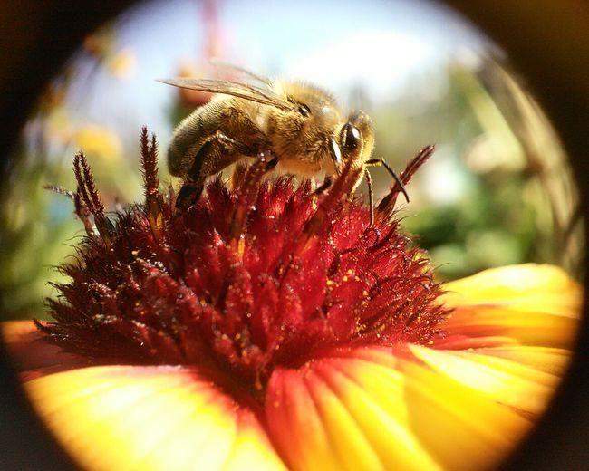 Hi! Flower Bee