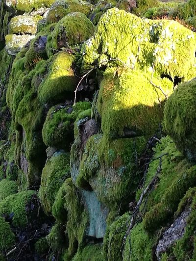 Sunbeam On Moss Purist No Edit No Filter Green Color Freshness Nature Outdoors Green Color Beauty In Nature Mossporn Moss On Rock Miles Of Moss Growth