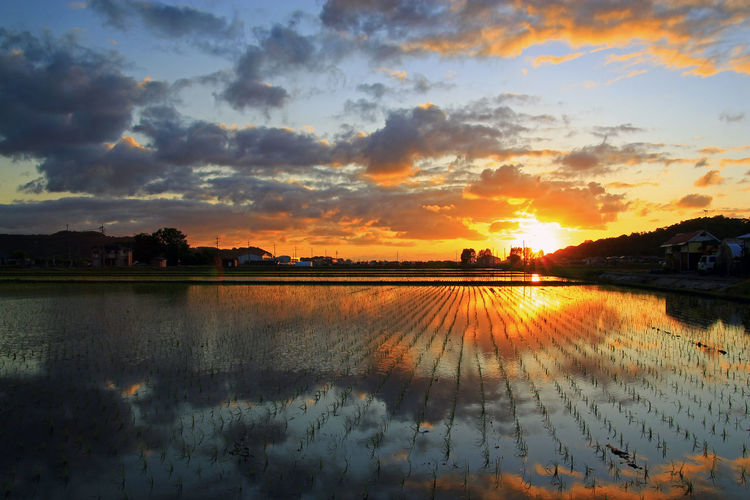Reflection Sunset Cloud - Sky Sky Scenics Water Nature Silhouette Beauty In Nature Tranquility No People Outdoors Tree Lake Rural Scene Multi Colored Day 水田Paddy Field 散歩中 Walk Wind stopped 水鏡