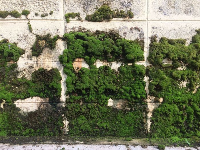 Moss Day Plant No People Green Color Growth Wall - Building Feature Built Structure Architecture Outdoors Nature Full Frame Sunlight Backgrounds Wall Building Exterior Pattern Textured  Creativity