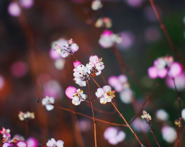 Nature's colors 🎨 Naturesbeauty Wilderness Wild Flowers Flower Fragility Growth Beauty In Nature Nature Freshness Focus On Foreground Close-up Blossom No People Pink Color Outdoors Blooming Flower Head