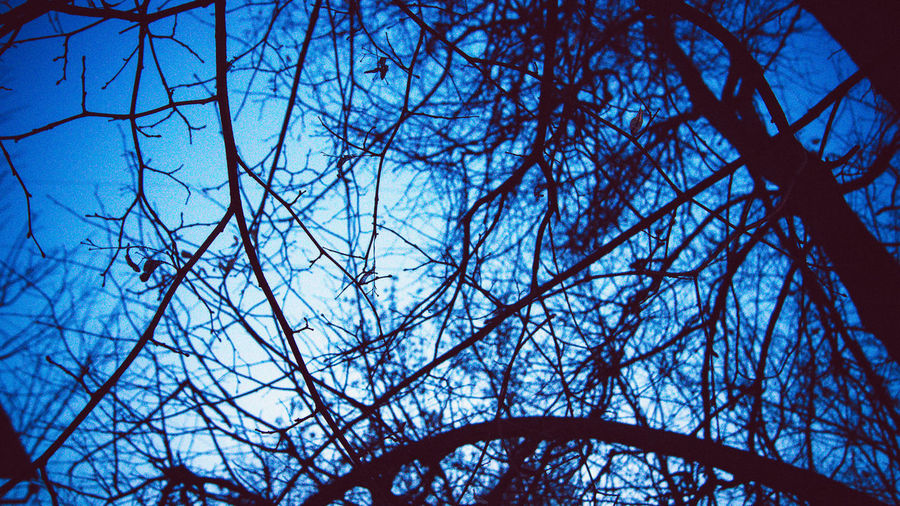 Tree Flower Branch Backgrounds Blue Full Frame Sky Close-up Apple Blossom Upward View Apple Tree Fruit Tree Orange Tree Orchard Apple Blossom Plant Life Blue Color Spring Cherry Tree Cherry Blossom Stamen Pistil Botany In Bloom Twig