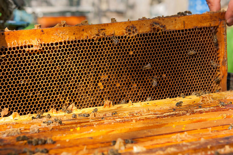 Animal Animal Themes Animal Wildlife Animals In The Wild APIculture Beauty In Nature Bee Beehive Close-up Day Food Group Of Animals Honey Honey Bee Honeycomb Insect Invertebrate Large Group Of Animals Metal No People