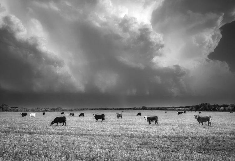 Storm -