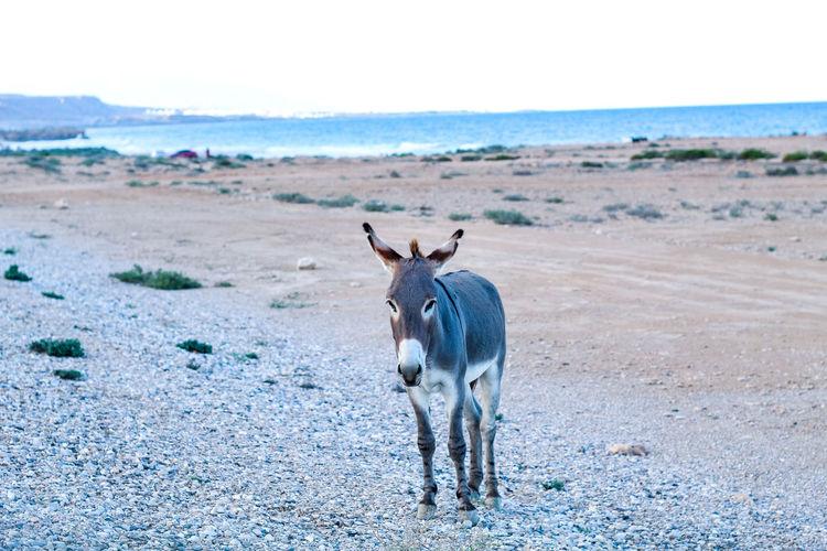 Horse standing on beach