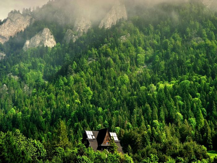 Houses Surrounded By Trees At Pieniny