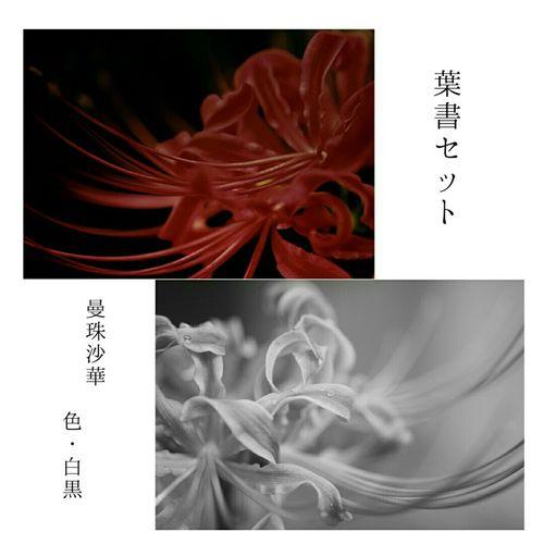 ポストカードセット販売中です。 詳細は 紅プロフィールからshopへ飛んで御確認ください。宜しくお願い致します。 写真集 販売中 写真 販売 Shop Amaryllis Flowers