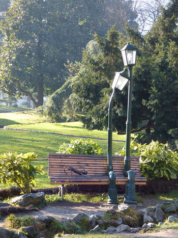 Beauty In Nature Bench Day Green Color Growth Love Nature No People Outdoors Sky Street Light Sunlight Tree