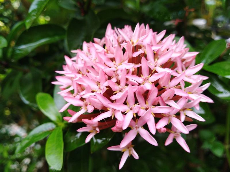 Spike Flower Green Color Pink Flower Pink Color Flower Nature Plant Beauty In Nature Petal Day Outdoors No People Flower Head Fragility Freshness Close-up