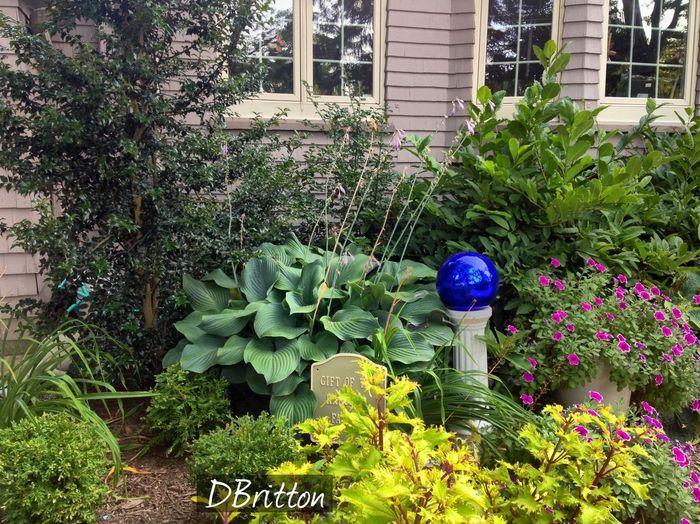 Garden Globe Flowerporn IPhoneography VividHDR