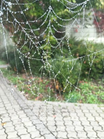 …quite fascinated by these spider webs! 4/4 — Captured them early yesterday morning near Dortelweil! Spider Web Spinnennetz