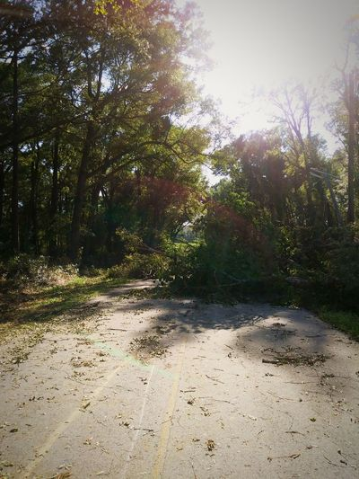 Trees and power lines down. Tree Nature Day Sunlight No People Outdoors Hurricane Irma 2017 No Power. :(