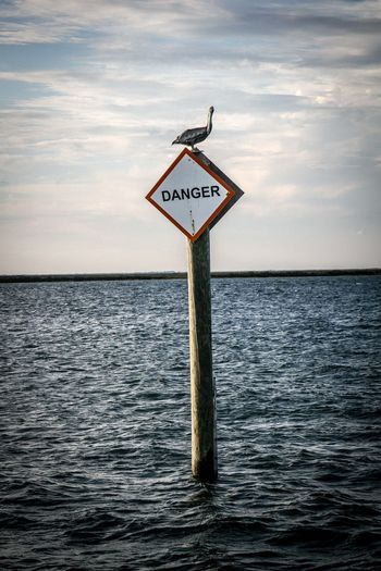 Backgrounds Bird Bluesky Communication Danger Direction Environmental Conservation Guidance Information Information Sign Non-western Script Outdoors Pole Protecting Where We Play Road Sign Sea Sign Sky Text Travel Traveling Warning Sign Water Western Script