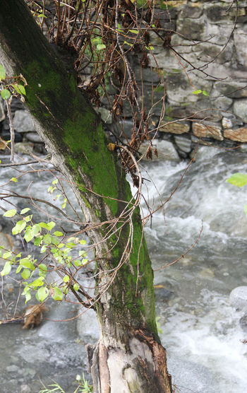 Water Plant Tree Nature No People Flowing Water River Tree Trunk Outdoors Stream - Flowing Water