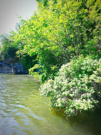Relaxing Taking Photos Check This Out On The River Iowa Iowariver Fishing Greenery Eyemnaturelover Open Edit Picturejunkie Hanging Out Landscapes